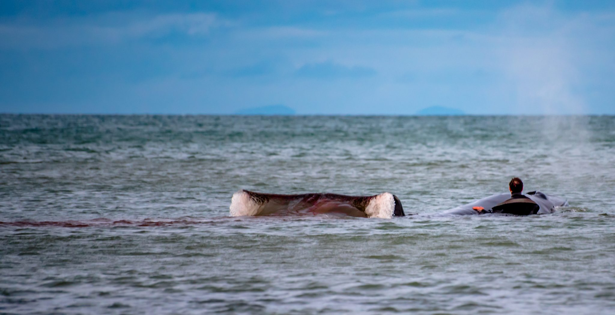 Beached Whale - Newcastle County Down